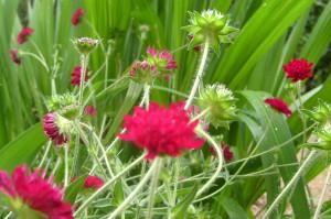 Projets de jardin