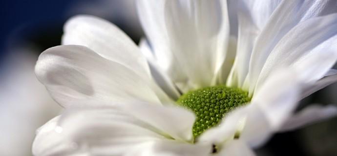 Idée de Jardin à la Fêtes des plantes les 22 &23 mars 2014